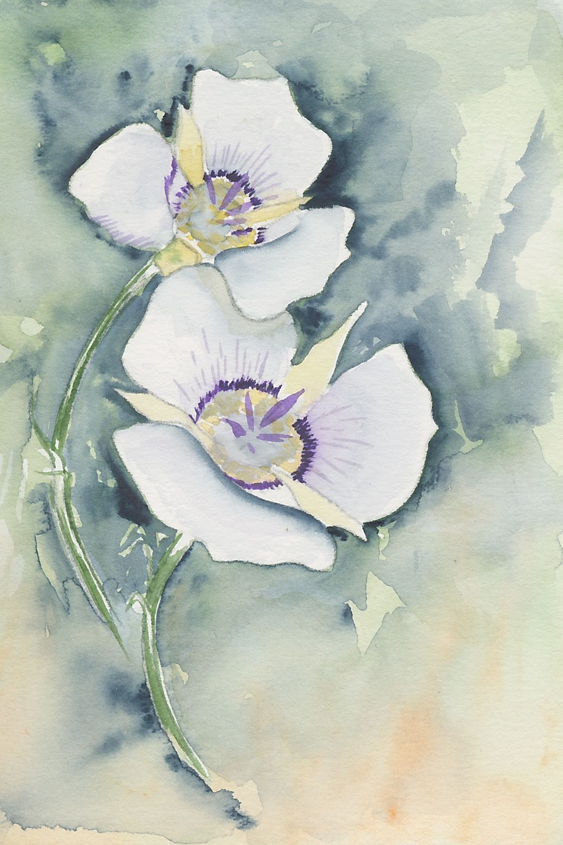 White flower watercolors nova arts group sego mightylinksfo